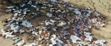 Zanzibar_revolution_graves2[1]